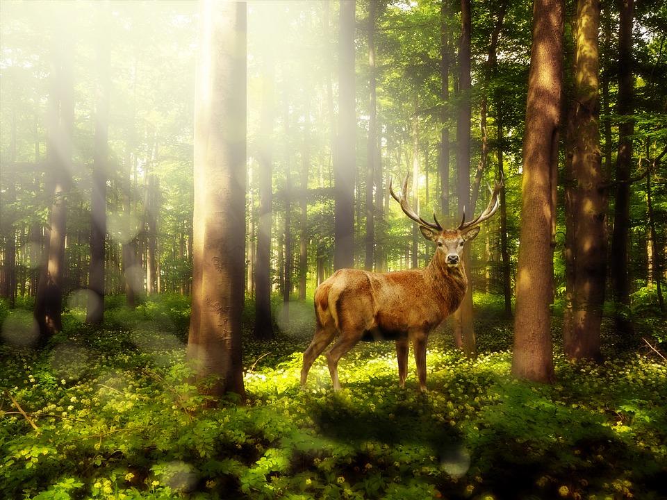 אנחנו אומרים יער
